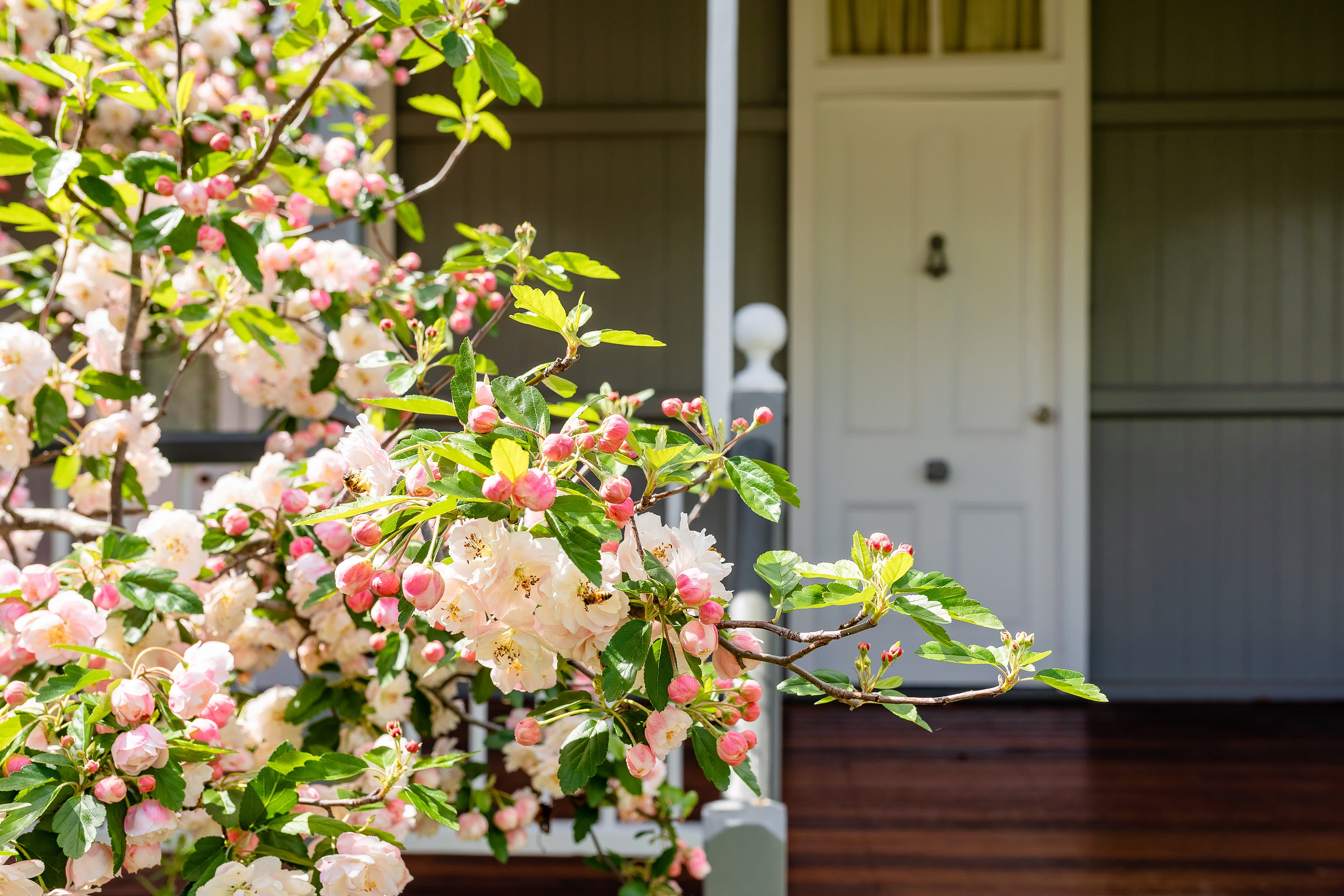 Apple Blossom Cottage