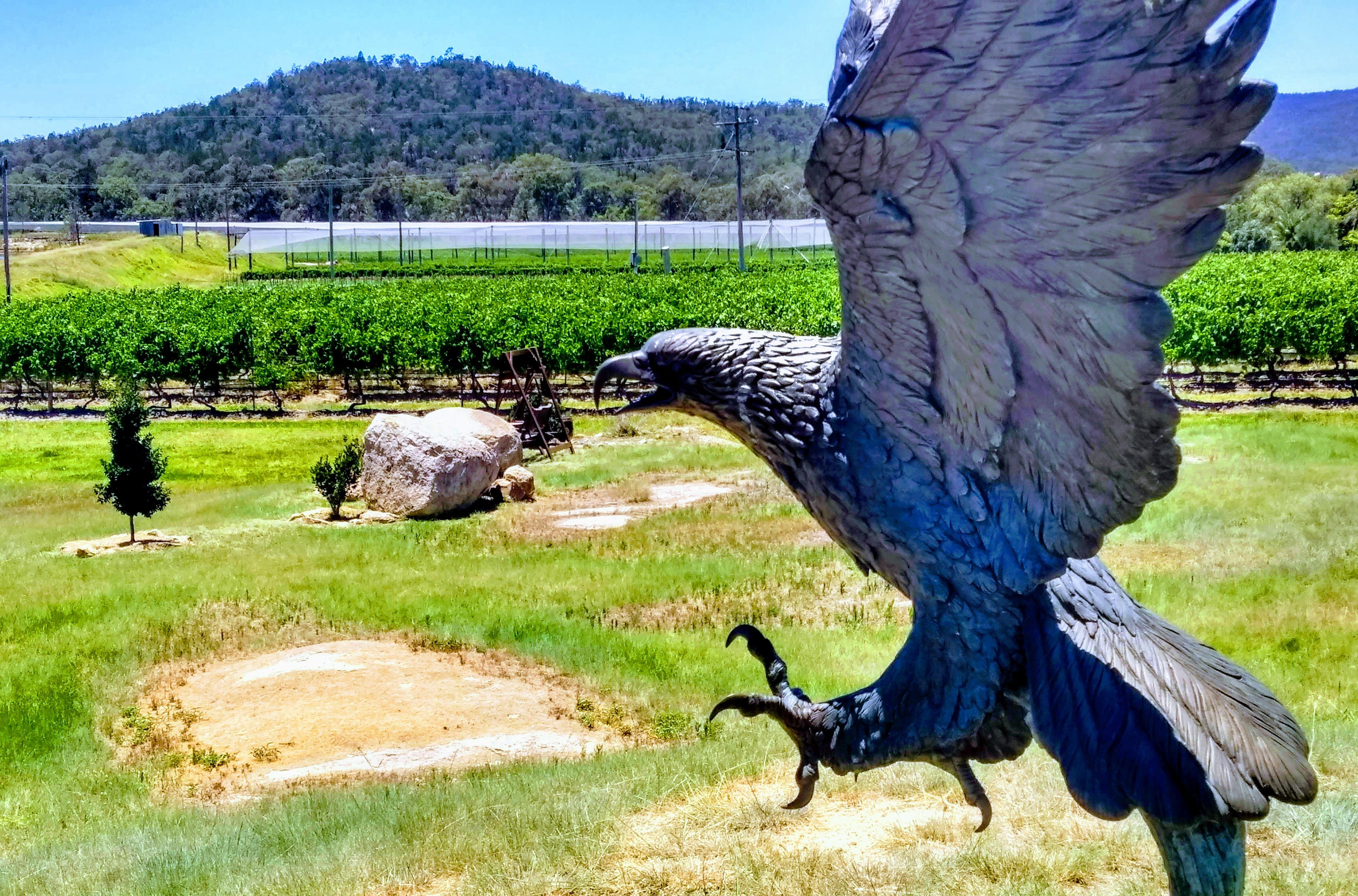 FREE Delivery of Jester Hill Wines