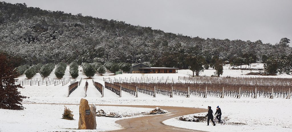 Savina Lane Wines Snow