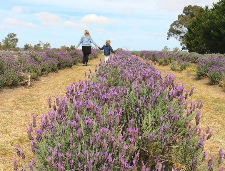 Aloomba Farm: Lavender Products